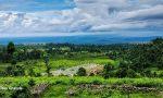 Dooars Valley (Samsing)