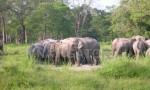Dooars -Elephant at Jaldapara