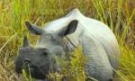 Dooars -Jaldapara Rhino