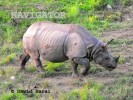 Dooars Jungle Safari Tour 6N/7D