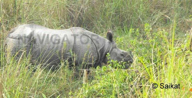 Dooars -Rhino at Chilapata