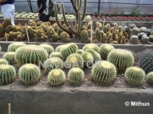 Kalimpong- Flower Nursery