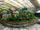 Flower Show - Gangtok