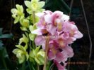 Flower Show -