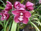 Flower Show - Gangtok